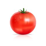 Tomato with water drops. Stock Photography