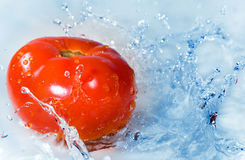 Tomato in water splashes Stock Photography