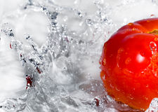 Tomato in water splashes Royalty Free Stock Image