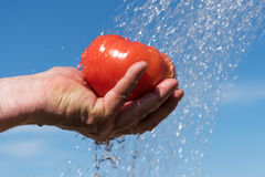 Tomato and water. Royalty Free Stock Photos