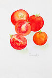 Tomato' watercolor painted Stock Images