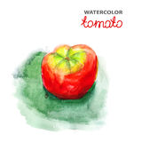 Tomato, watercolor painting Royalty Free Stock Photos
