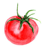 Tomato watercolor Royalty Free Stock Images