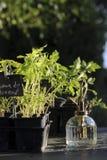 Tomato watering semi Stock Photos