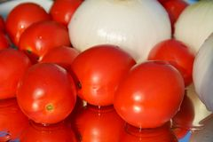 Tomato and white onion background Stock Image