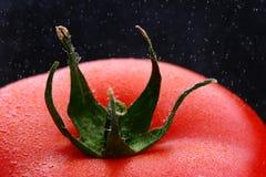 tomato widok makro Zdjęcia Royalty Free
