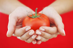 Tomato in woman hands Royalty Free Stock Photos