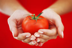 Tomato in woman hands Royalty Free Stock Photography