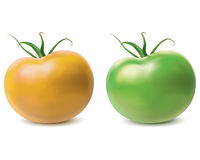 Tomato yellow and green. Vector Stock Photo