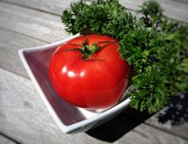 Tomatoe в белой чашке Стоковая Фотография