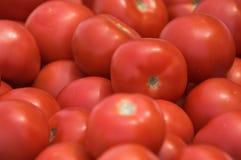 tomatoe Στοκ Φωτογραφίες
