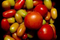Tomatoe royalty-vrije stock afbeeldingen