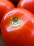 Tomatoe Royalty-vrije Stock Fotografie