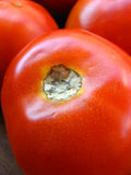 Tomatoe Royalty Free Stock Photography