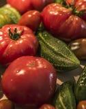 Tomatoe and cucumber wooden table bio organic backyard healthy outdoor produce germany macro closeup Royalty Free Stock Image