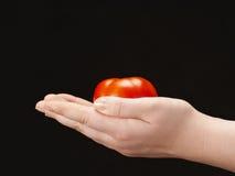 Tomatoe i händerna av barnet mot - gömma i handflatan att vända upp Arkivfoton