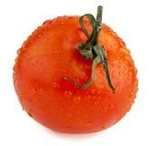 Tomatoe Royalty Free Stock Images