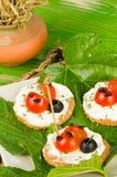 Tomatoe nyckelpigor Fotografering för Bildbyråer