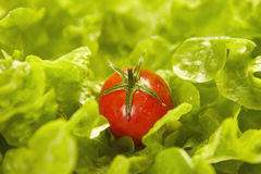 Tomatoe over lettuce Royalty Free Stock Images