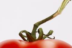 Tomatoe Rebe Stockfoto