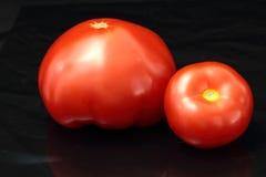 Tomatoe Stock Photography