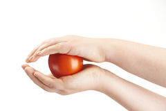 Tomatoe sandwiched between childs hands Royalty Free Stock Images