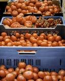 Tomatoe-Zusammenstellung Lizenzfreies Stockbild