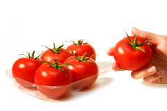 Tomatoes. Six red tomatoes Stock Photography