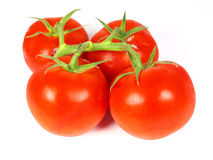 Tomatoes. Ripe tomatoes isolated on white royalty free stock photos