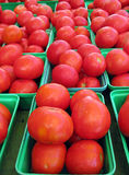 Tomatoes. Ripe juicy field tomatoes ready for customers at local farmers market stock photos
