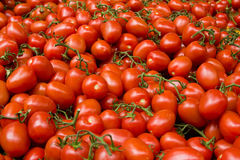 Tomatoes. Lots of vine tomatoes in a marketplace Royalty Free Stock Images
