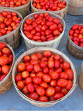 Tomatoes. Baskets of field grown plum tomatoes stock photos