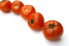 Tomatoes. On the white background Royalty Free Stock Photography