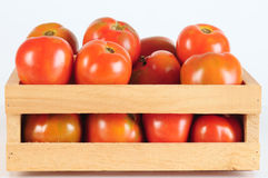 Tomatoes. Stock Photography