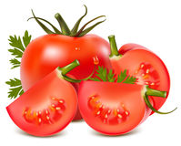 Tomatoes. Photorealistic  illustration. Tomato with water drops and parsley Stock Photography