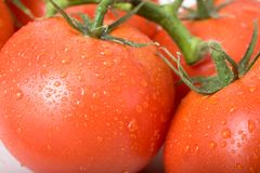 Free Tomatoes Stock Photo - 1329310