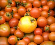 Tomatoes. Fresh tomatoes at the market at the vegetable stand Royalty Free Stock Photography