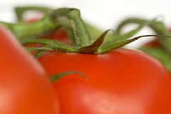 Tomatoes. Some tomatoes, in macro view royalty free stock image