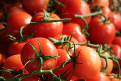 Tomatoes. On the vine at a farmers' market Stock Image