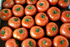 Tomatoes. Ripe tomatoes on the farmers market Royalty Free Stock Photography