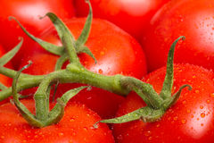 Tomatoes Royalty Free Stock Images