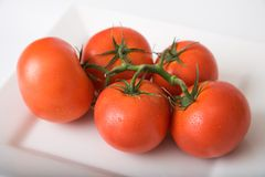 Tomatoes 2. Tomatoes on a vine in a white square plate royalty free stock photo