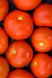 Tomatoes. 10 very red, very ripe tomatoes Royalty Free Stock Image