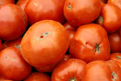 Tomatoes. The close-up of red tomatoes Royalty Free Stock Photo
