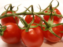 Tomatoes. Cherry tomatos taken from fridge Stock Image