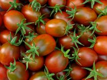 Tomatoes. Fresh cropped black variety tomatoes with green calyxes Stock Image