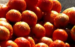 Tomatoes. A pile of fresh juicy tomatoes sprinkled with water drops for sale in a village in India. The tomato is now grown worldwide for its edible fruits, with royalty free stock photos
