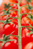 Tomatoes. Some fresh ripe cherry tomatoes on a branch Royalty Free Stock Images