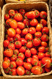 Tomatoes. Ripe red tomatoes in a basket Stock Photos