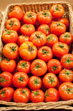 Tomatoes. Ripe red tomatoes in a basket Royalty Free Stock Photography